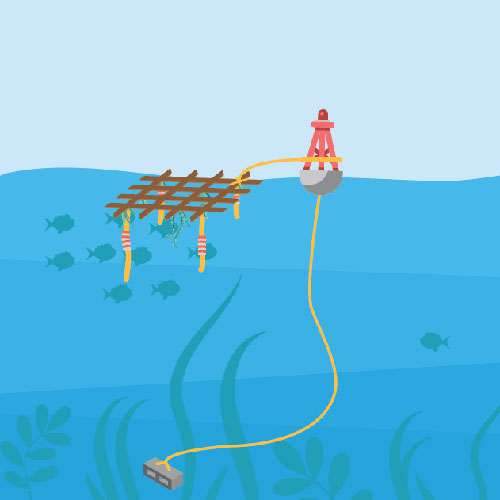anchored fish aggregating device
