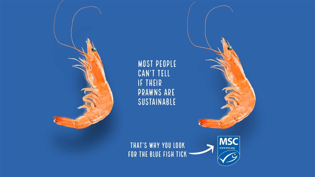 Most people can't tell if their prawns are sustainable