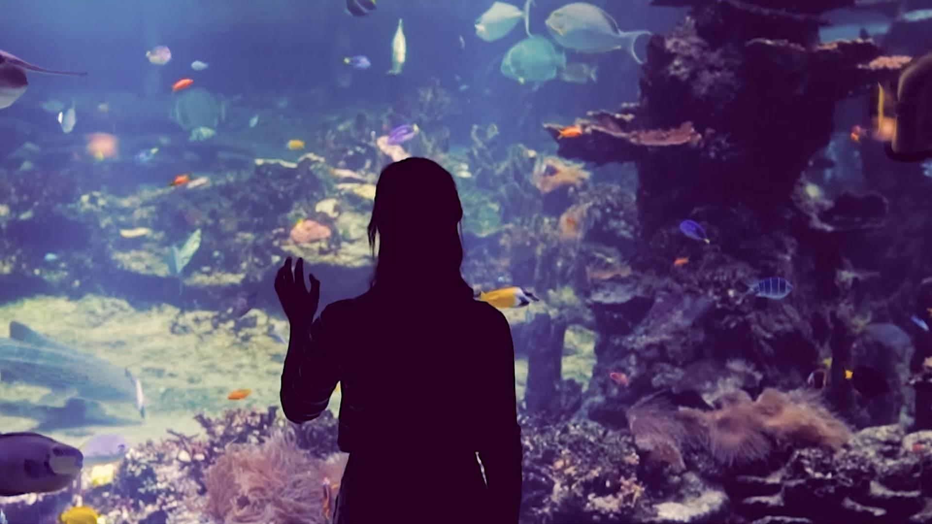 Girl-at-Aquarium-Centre
