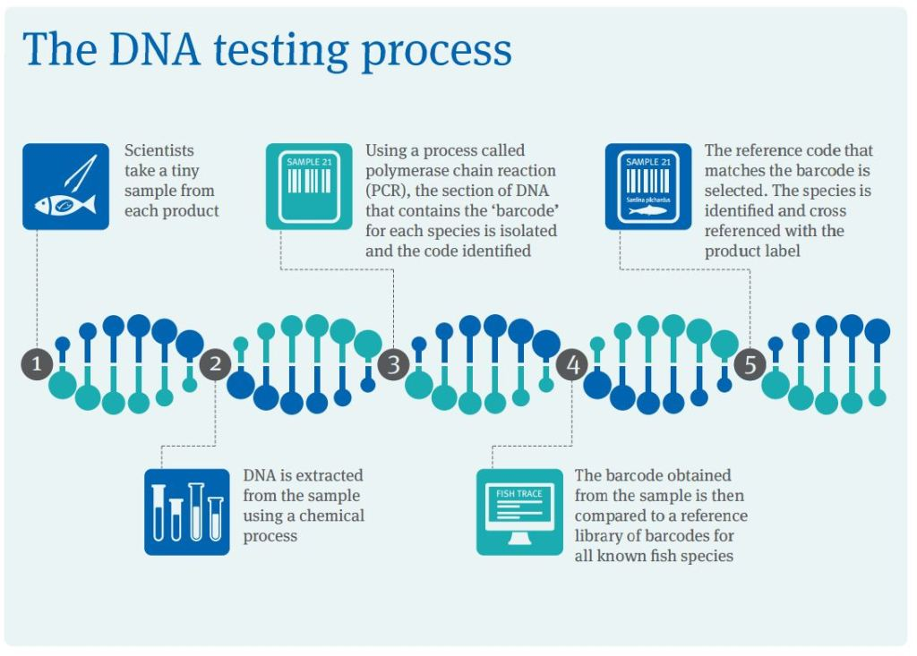 DNA testing process for fish