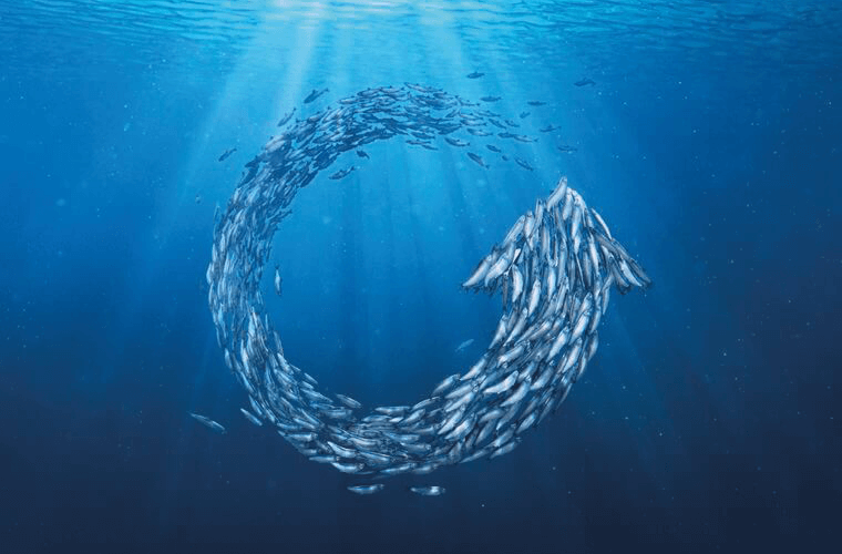 Fish making the refresh symbol