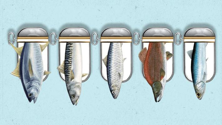 illustratie van tonijn, makreel, sardines, zalm en ansjovis in blik met blauwe achtergrond