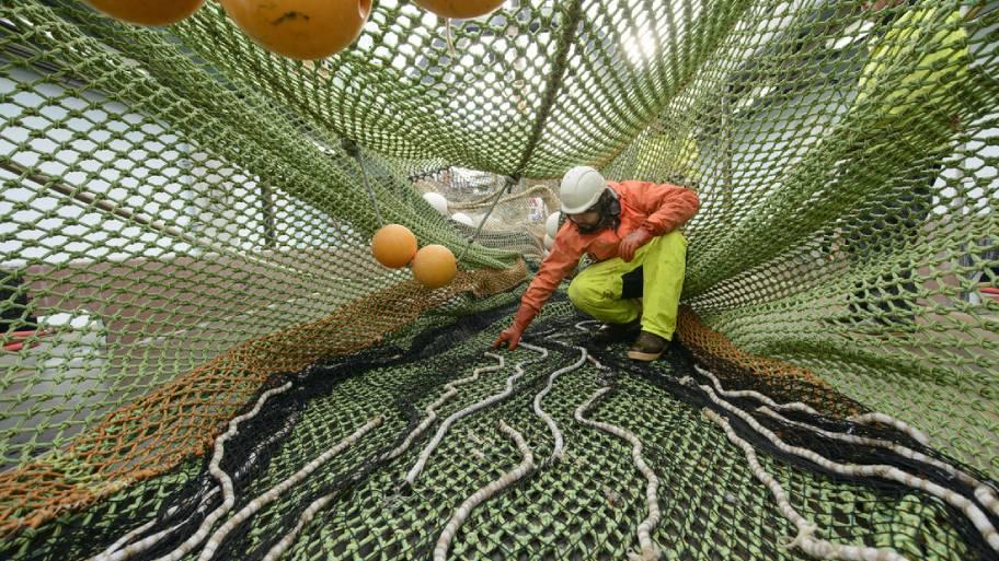 alaska pollock fisherman in net on deck