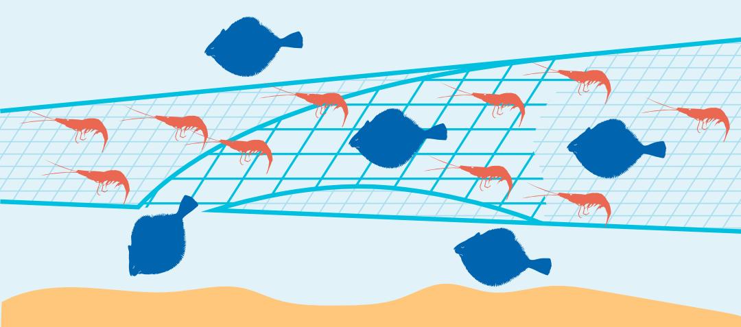 Nordseekrabbenfischerei-Fluchtschleuse