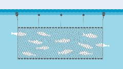 Illustration Kiemennetz im Einsatz