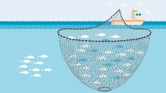 Illustration Ringwadennetz im Einsatz
