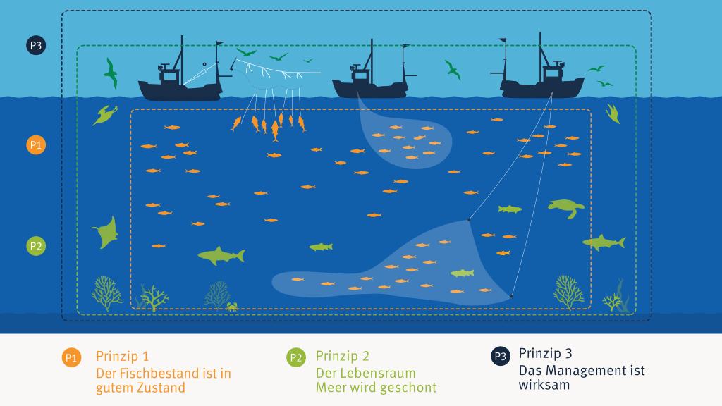 Infografik - Die drei Prinzipien des MSC-Umweltstandard