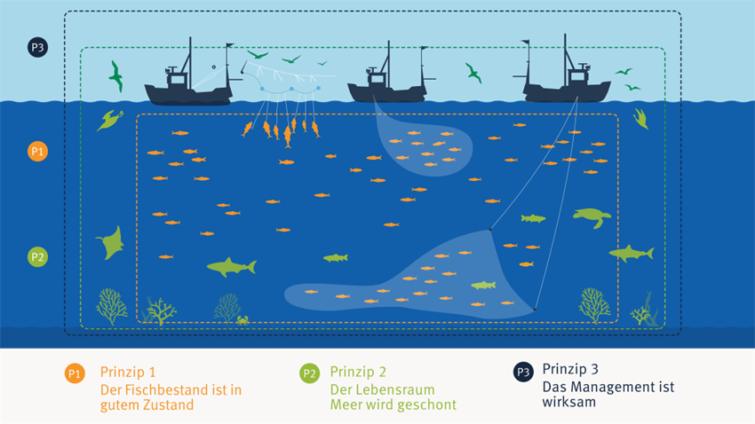 Illustration der drei Kernprinzipien des MSC-Standards