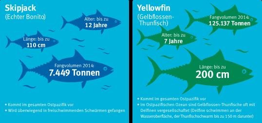 skipjack-yellowfin