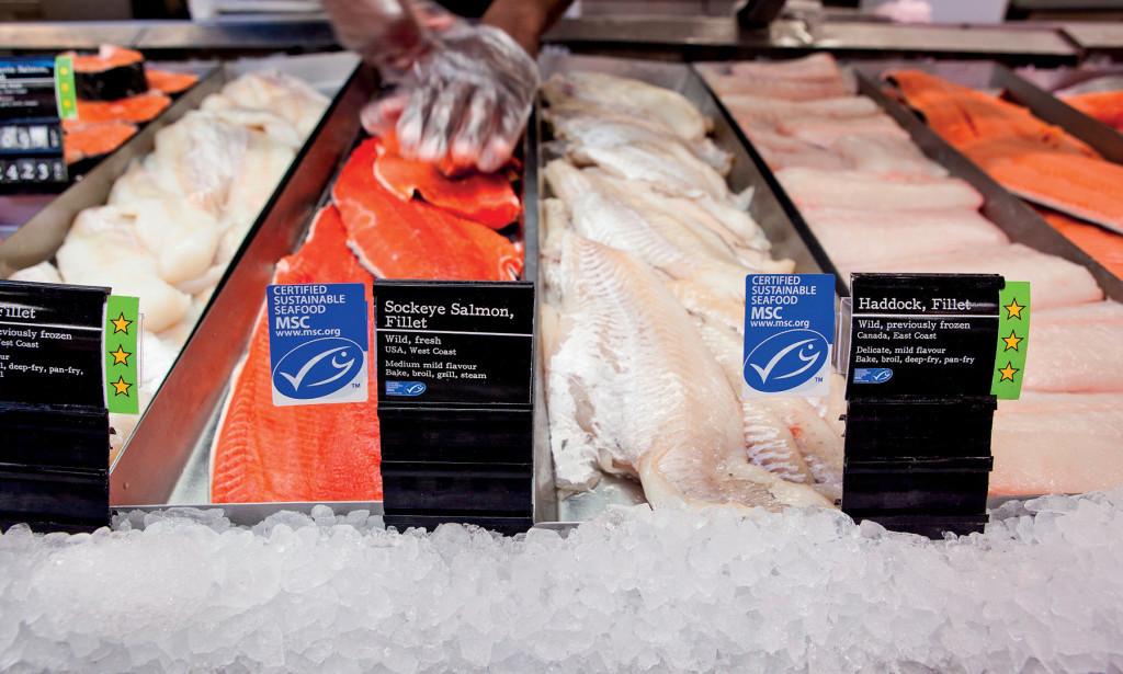 Fischtheke-Lachs-Schellfisch-MSC-Label