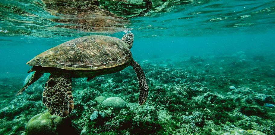 Meeresschildkröte schwimmt unter Wasser