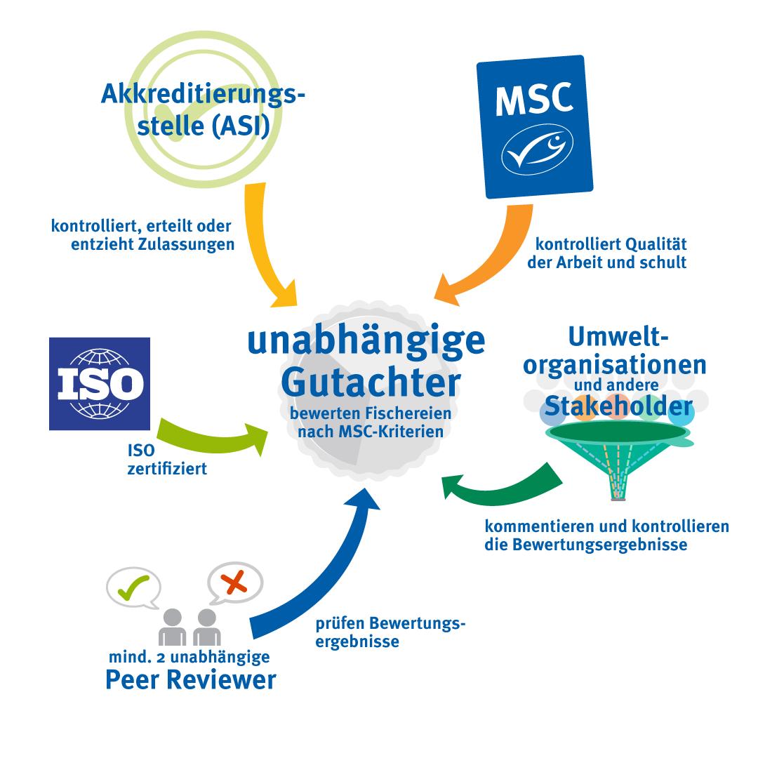 Schaubild Gutachterkontrolle: unabhängiger Gutachter bewertet Fischereien nach MSC-Standard - darauf wirken ein Akkreditierungsstelle, ISO, Umweltorganisationen und andere Stakeholder sowie Peer Reviewer