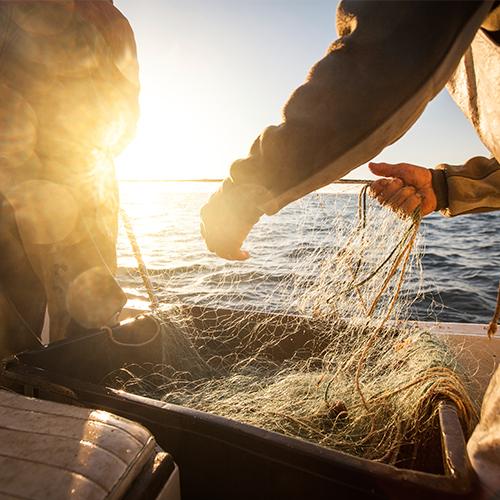 Fischer holen das Fischernetz ein auf Fischereiboot