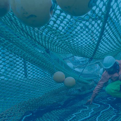 Deckhand-Alters-Fishing-Net-spotlight
