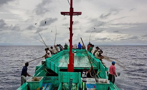 PT. Citraja Ampat Canning, Sorong Pole and Line Skipjack and Yellowfin Tuna