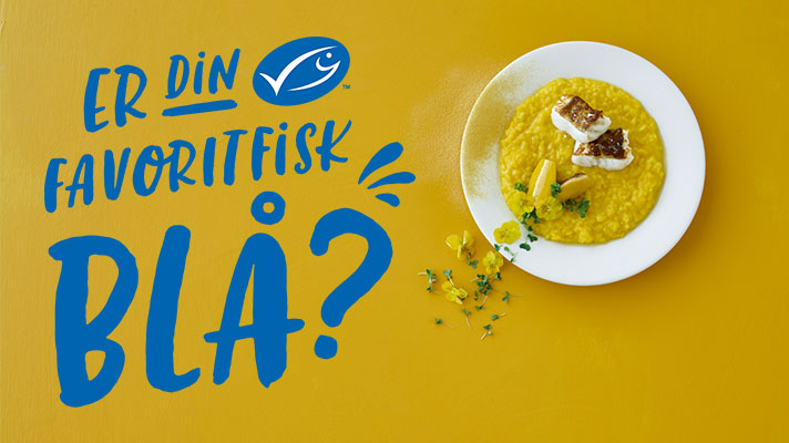 Er din Favoritfisk Blå?
