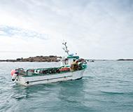 Pecherie-homard-Cotentin-MSC-France
