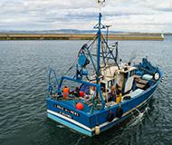 Pecherie-sardine-Bretagne-MSC
