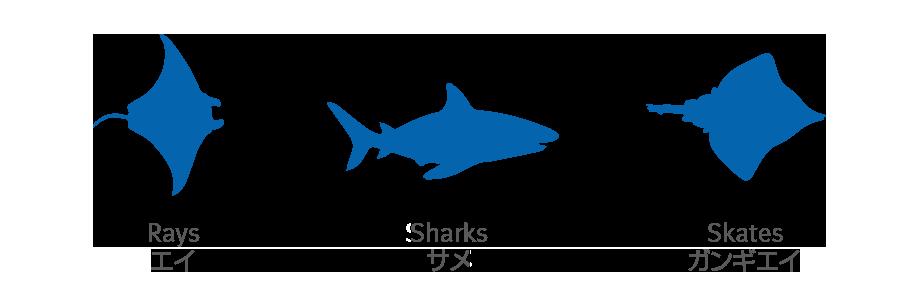 サメとエイ