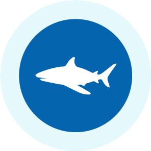 フィジーのサメ