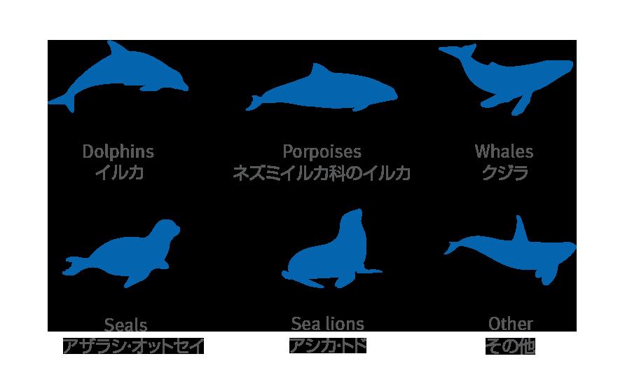 海洋哺乳類