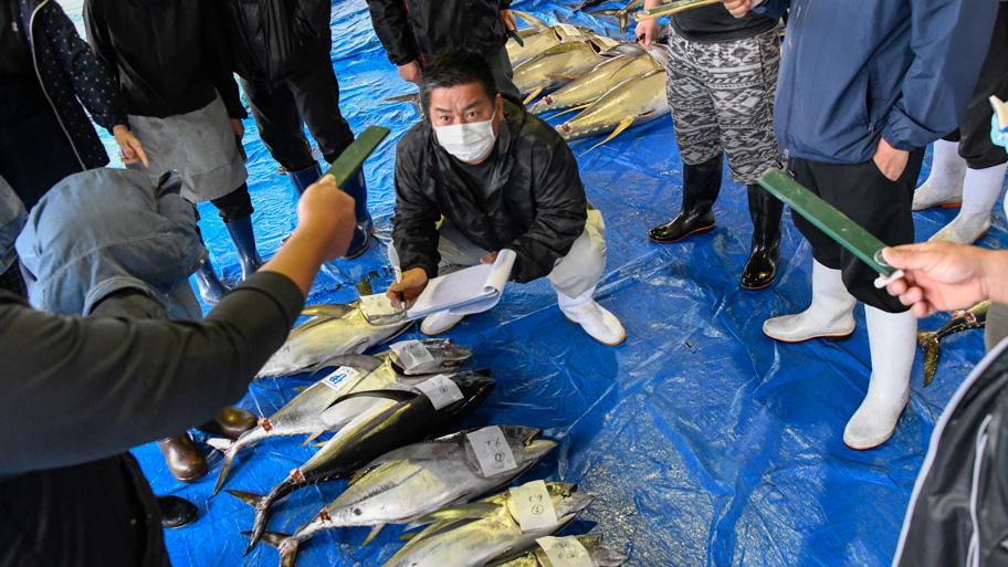 MSC認証取得漁業によるメバチマグロのセリ