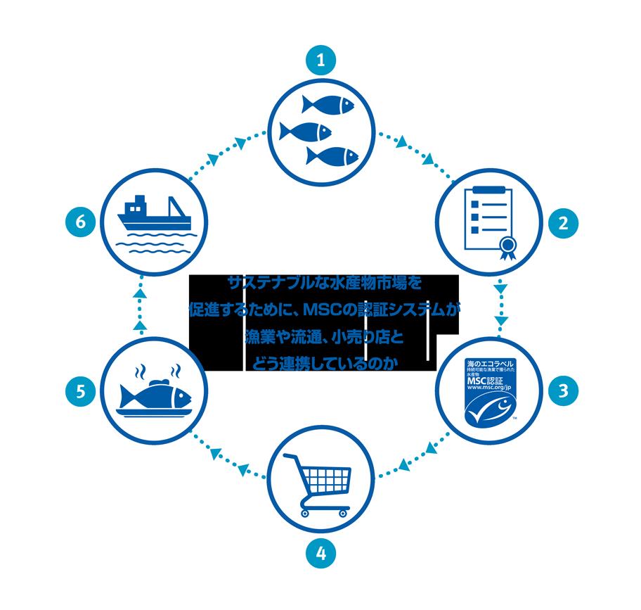 サステナブルな水産物市場を促進するために、MSCの認証システムが漁業や流通、小売り店とどう連携しているのか