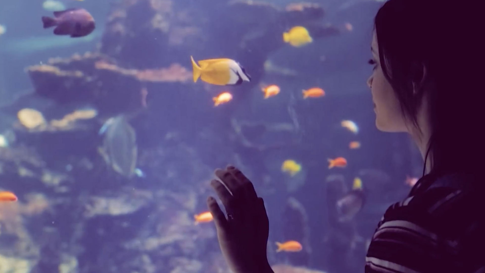 Close up of teenage girl's face looking at fish in aquarium