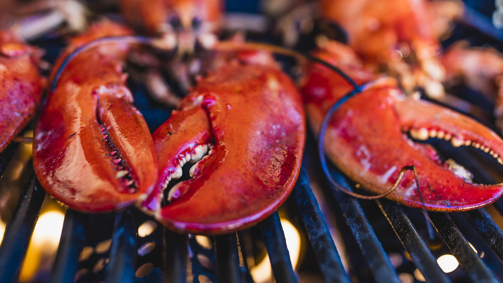 Close-up of Canadian lobsters grilling on the barbecue