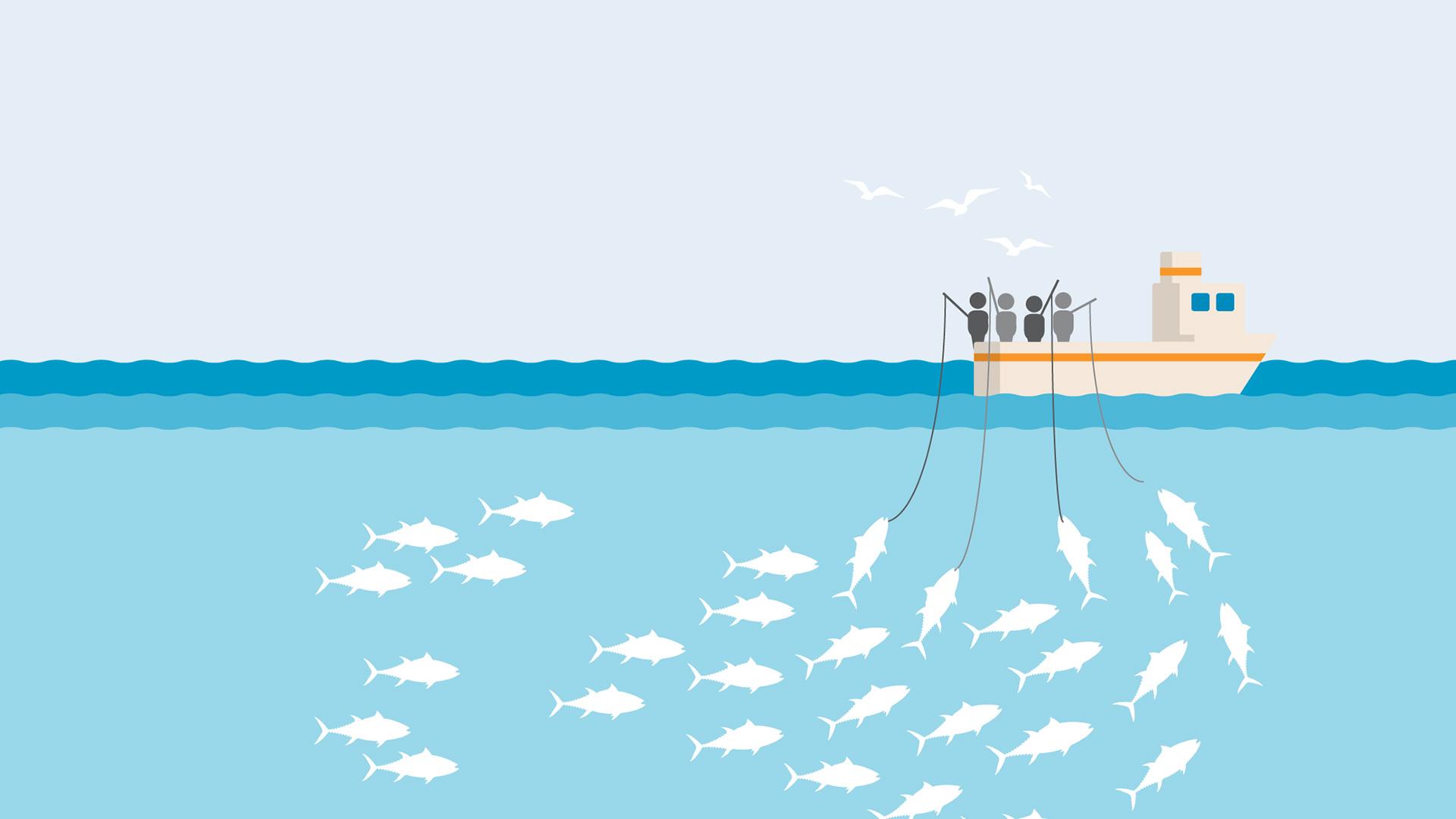 Pole And Line Fishing Gear Marine Stewardship Council Marine Stewardship Council