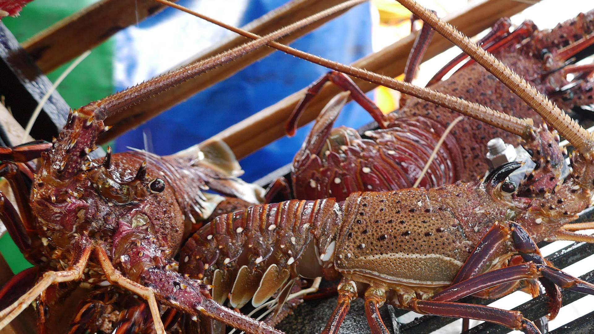 rock lobster HEADER DESKTOP