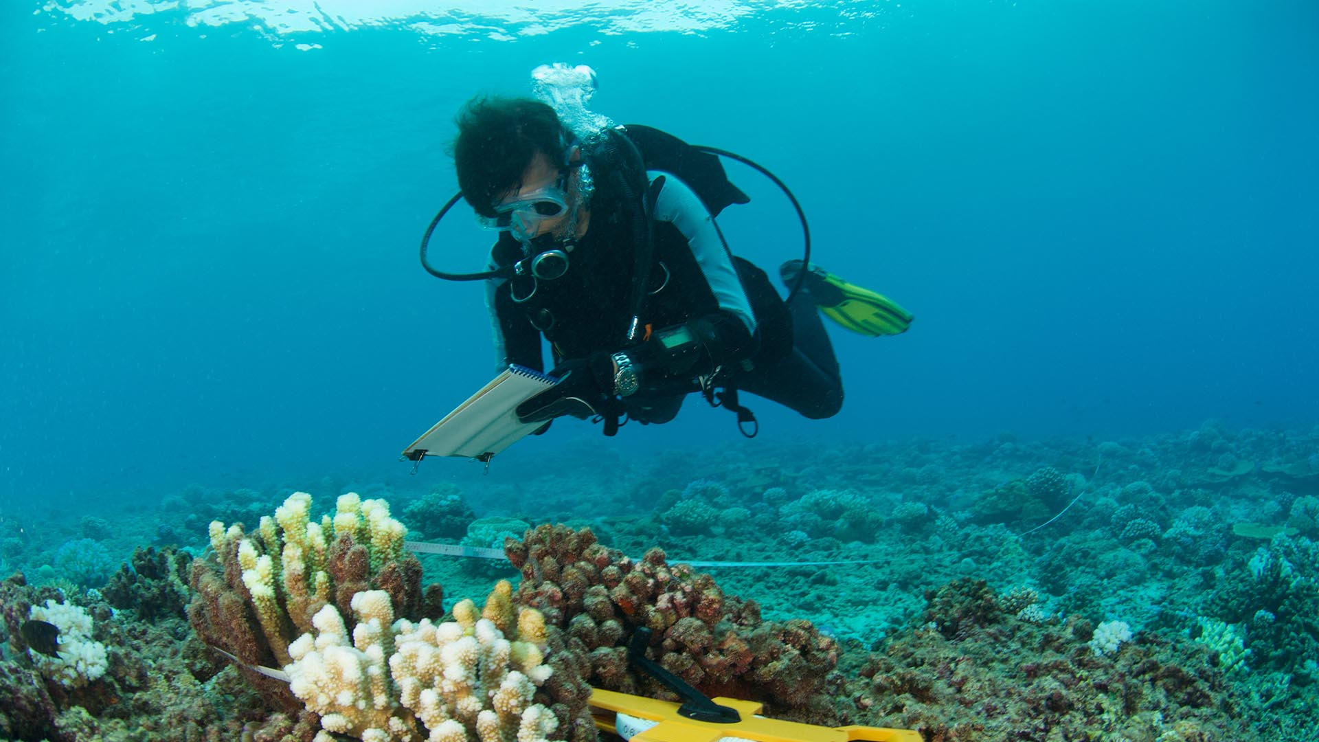 Scuba diver underwater in front of coral, with checklist in hand