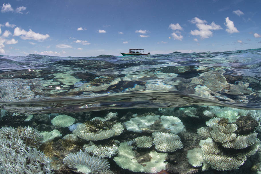 Shallow underwater shot of bleached coral with small boat on surface on horizon