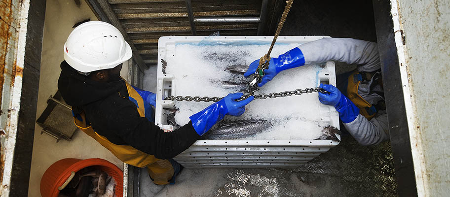 Aerial photo of men in hard hats with crates of fish on ice