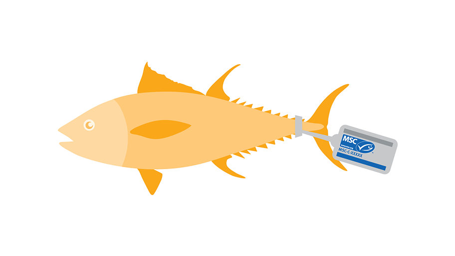 Fish tagged with MSC label, species name, Chain of Custody and MSC claim