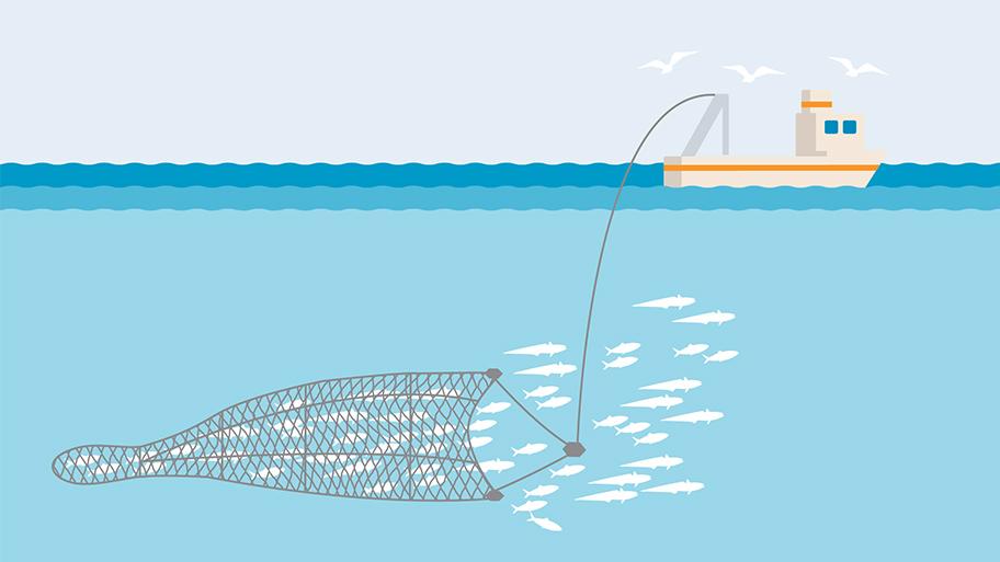 Pelagic or midwater trawl fishing gear illustration