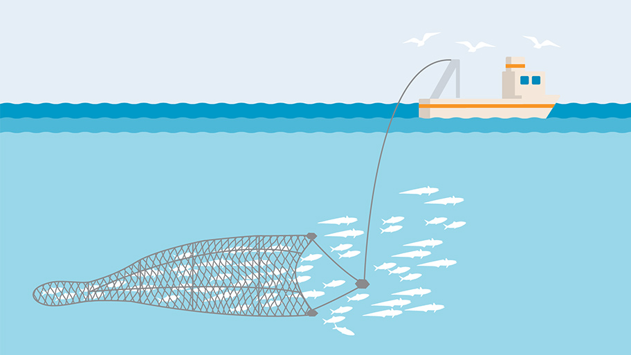 Pelagic or midwater trawl fishing gear illustration