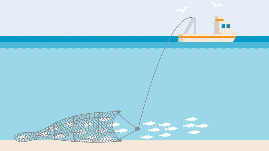Bottom trawl demersal trawl illustration