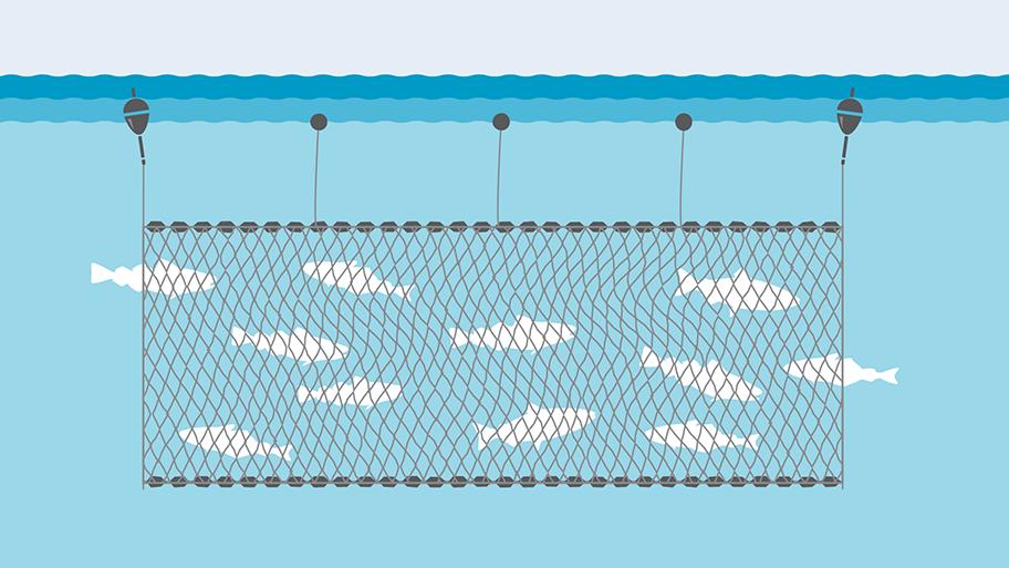 Gillnet fishing gear illustration