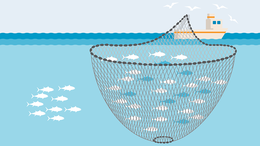 Purse Seine fishing gear illustration