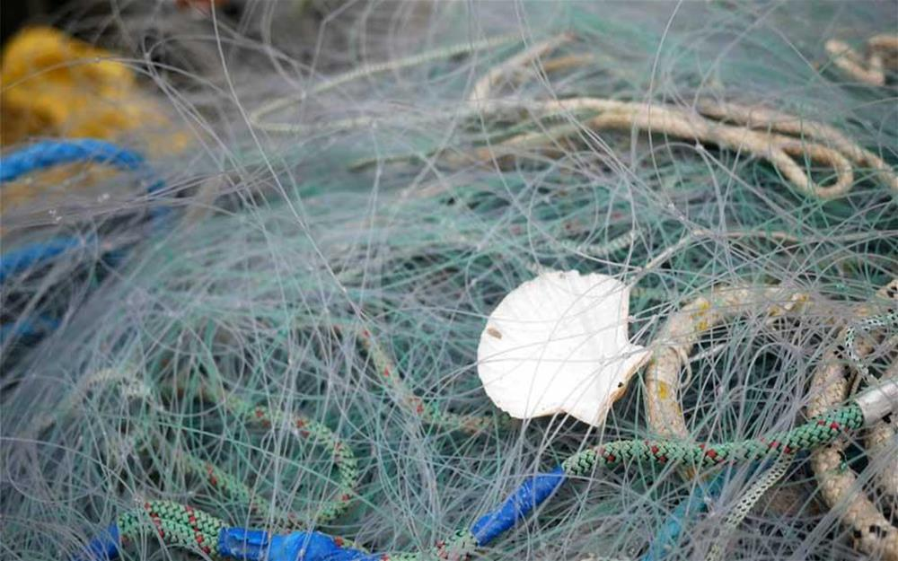 Ghost fishing nets with shell caught in them