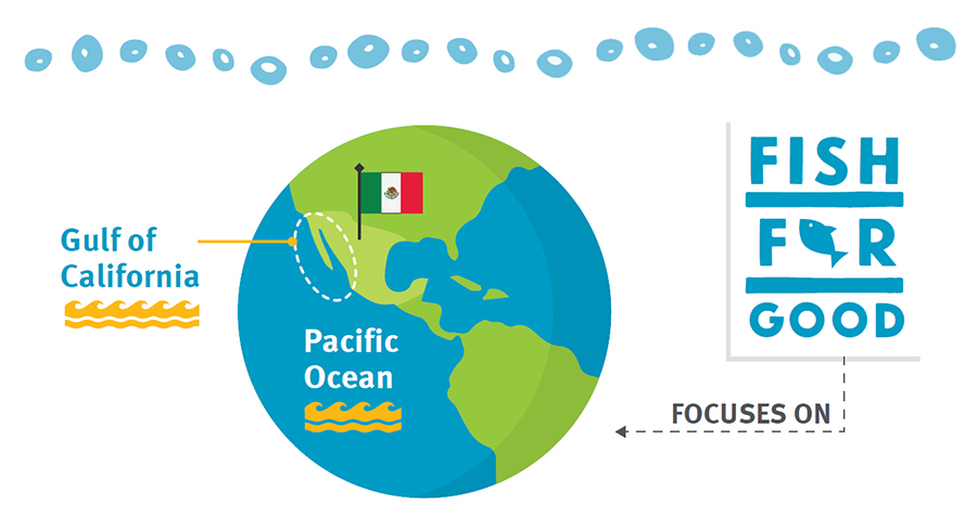 Fish For Good Mexico infographic showing Gulf of California on globe