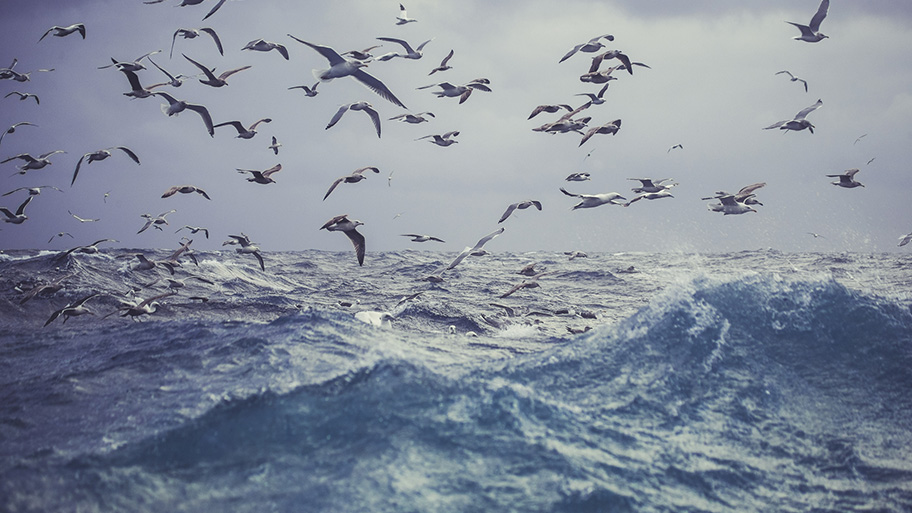 A flock of gulls flying over the Barents Sea