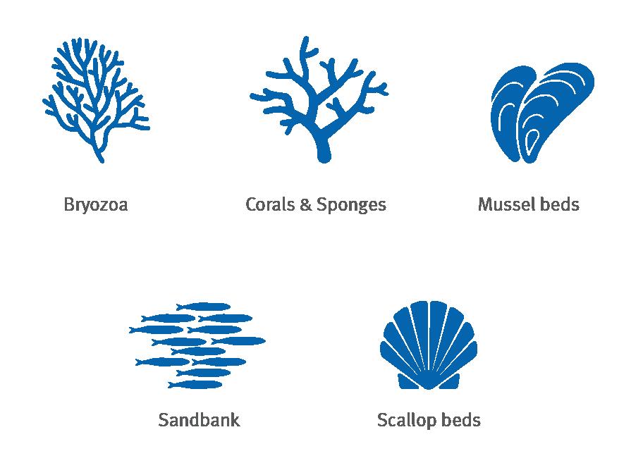 Bryozoa, corals, mussel, sandbank, scallop silhouette icons