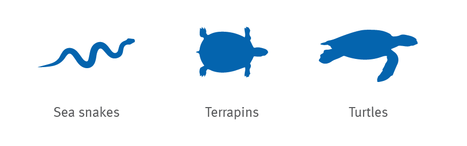 Sea snake, terrapin, turtle silhouette icons