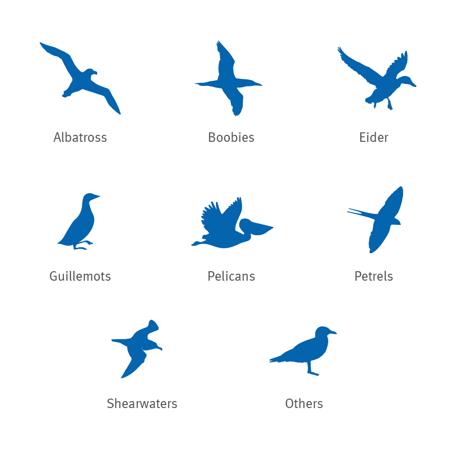 Albatross, boobie, eider, guillemot, pelican, petrel and shearwater silhouettes icons