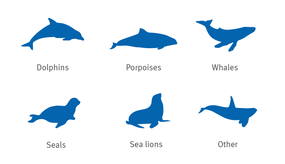 Dolphin, porpoise, whale, seal and sea lion silhouettes graphic