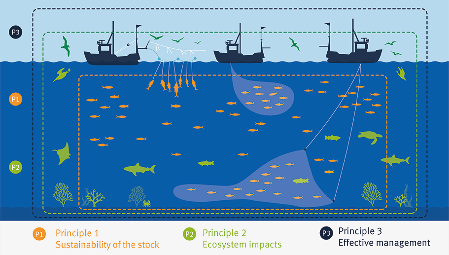 Graphic showing 3 principles of the MSC Fisheries Standard