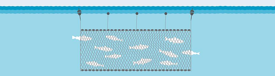 Illustration of gillnet fishing gear