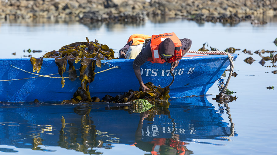 Man if life jacket leaning out of small boat, gathering seaweed